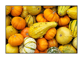 _DSC7680-card-pumpkins-and-gourds-46300-bright-contrast1