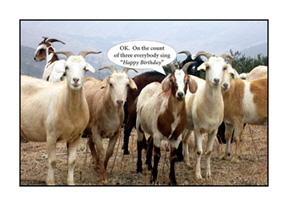 Happy birthday goat - photo#25